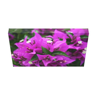 Purple bougainvillea canvas print
