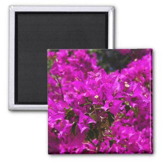 Purple Bougainvillea flowers Magnet