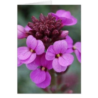 purple bud card