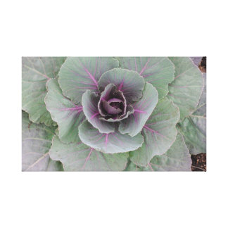 Purple Cabbage Wrapped Canvas