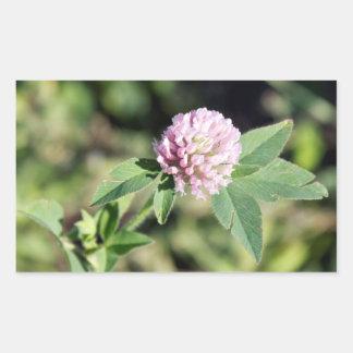 Purple Clover Wildflower Photo Rectangular Sticker