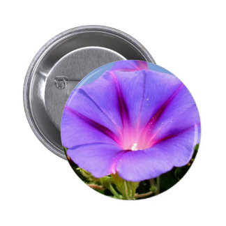 Purple Colored Morning Glory Flower Garden Backgro Pinback Buttons