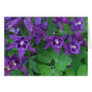Purple Columbines - All Occasions Card