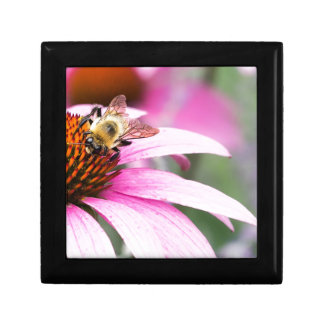 Purple Cone Flower with Bee Gift Box