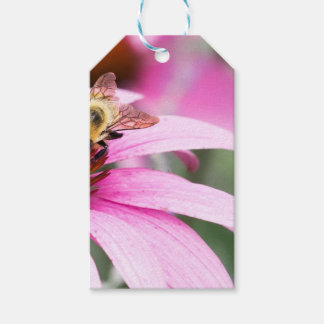 Purple Cone Flower with Bee Gift Tags