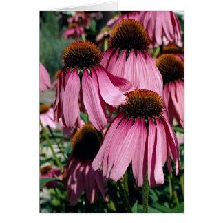 Purple coneflower, echinacea purpurea card