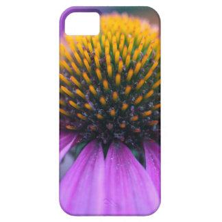 Purple coneflower (Echinacea purpurea) iPhone 5 Cases