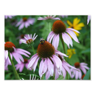 Purple Coneflower with Bee Photo Paper Satin