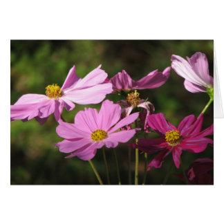 Purple Cosmos Flowers Card
