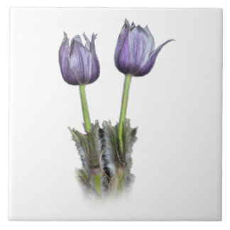 Purple Crocus Flowers Large Square Tile