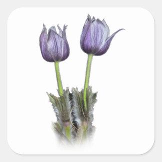 Purple Crocus Flowers Square Sticker