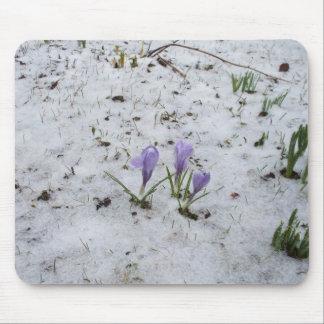 Purple Crocus in Snow Mouse Pad