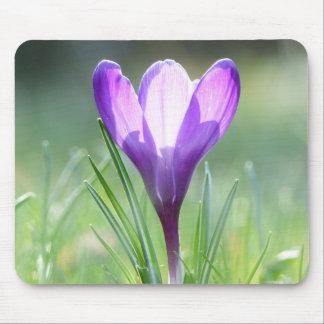 Purple Crocus in spring 02.2 Mouse Pad