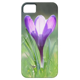 Purple Crocus in spring 03.3 Barely There iPhone 5 Case