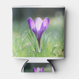 Purple Crocus in spring 03.3 Can Cooler