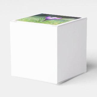 Purple Crocus in spring 03.3 Favour Box