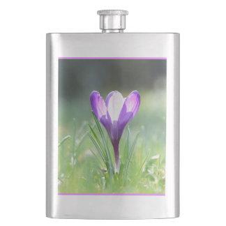 Purple Crocus in spring 03.3 Hip Flask