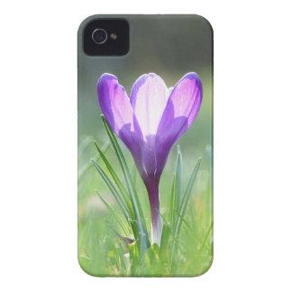 Purple Crocus in spring 03.3 iPhone 4 Case