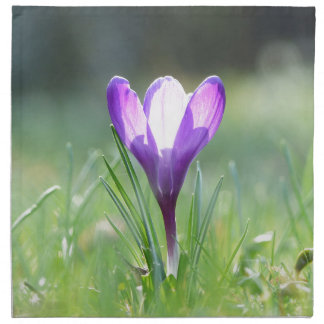 Purple Crocus in spring 03.3 Napkin