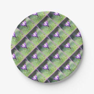 Purple Crocus in spring 03.3 Paper Plate