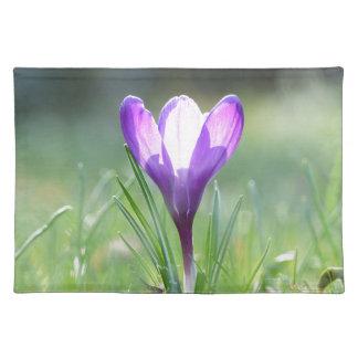 Purple Crocus in spring 03.3 Placemat