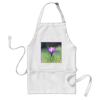 Purple Crocus in spring 03.3 Standard Apron