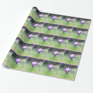 Purple Crocus in spring 03.3 Wrapping Paper