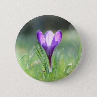 Purple Crocus in spring 6 Cm Round Badge