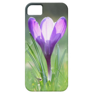 Purple Crocus in spring iPhone 5 Cases