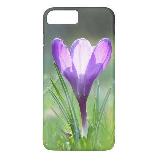 Purple Crocus in spring iPhone 7 Plus Case