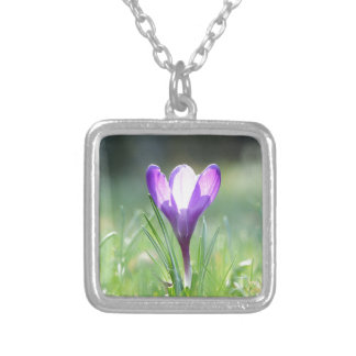 Purple Crocus in spring Silver Plated Necklace