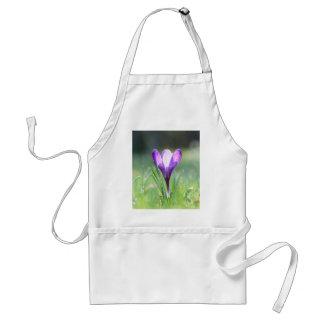 Purple Crocus in spring Standard Apron