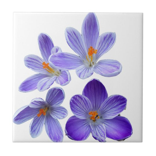 Purple crocuses 02 ceramic tile