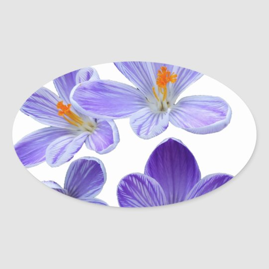 Purple crocuses 02 oval sticker