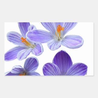 Purple crocuses 02 rectangular sticker