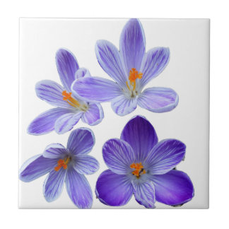 Purple crocuses 02 small square tile