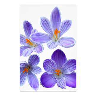 Purple crocuses 02 stationery