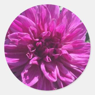Purple dahlia classic round sticker