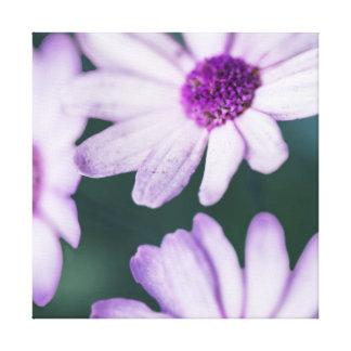 Purple Daisies Canvas Prints
