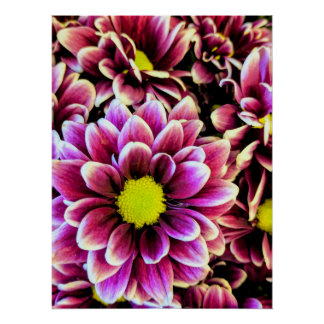 Purple Daisies Poster