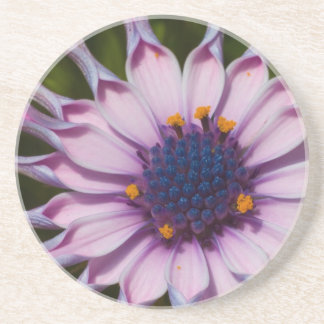 Purple Daisy Coaster