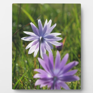 Purple daisy flowers on green background plaque