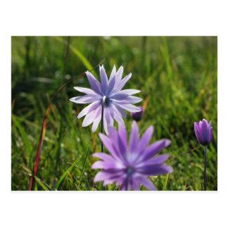 Purple daisy flowers on green background postcard
