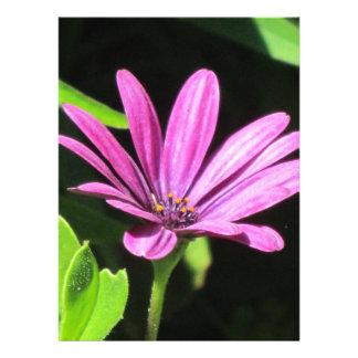 Purple Daisy Personalized Announcement