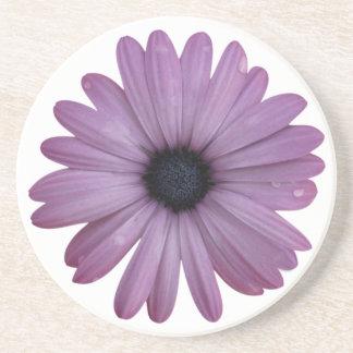 Purple Daisy Like Flower Osteospermum ecklonis Coasters