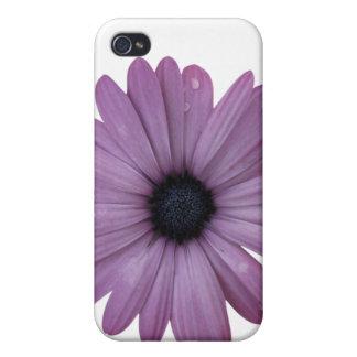 Purple Daisy Like Flower Osteospermum ecklonis iPhone 4/4S Covers