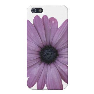 Purple Daisy Like Flower Osteospermum ecklonis iPhone 5/5S Cover