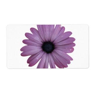 Purple Daisy Like Flower Osteospermum ecklonis Shipping Label