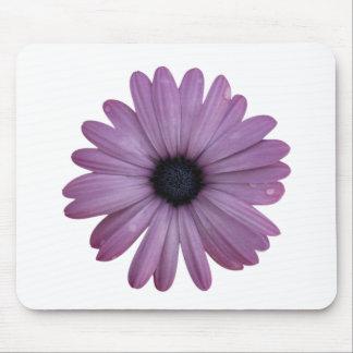 Purple Daisy Like Flower Osteospermum ecklonis Mouse Pad