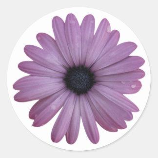 Purple Daisy Like Flower Osteospermum ecklonis Round Sticker
